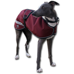 Blue whippet in a maroon waterproof windproof whippet coat uk