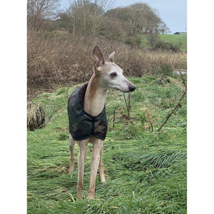 UK manufactured camouflage whippet coat. Whippet in a field