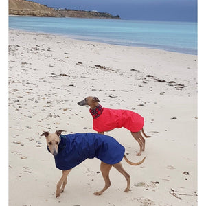 whippets on the beach wearing waterproof winter coats. such trendy whippets