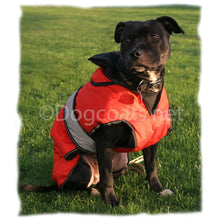 Load image into Gallery viewer, staffordshire bull terrier dog coat with underbelly protection red