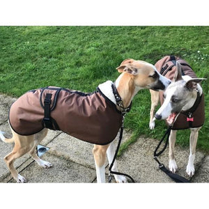 George and Mollie wearing their new sandstone waxed whippet coats