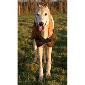 Front view of greyhound wearing a dog coat. clip release adjustable neck fastener