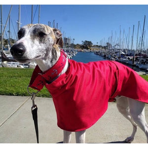 sighthound clothes uk. high-collar greyhound and whippet coats uk