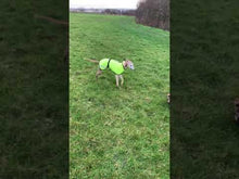 Load and play video in Gallery viewer, Reflective Whippet Coats. High Visibility.