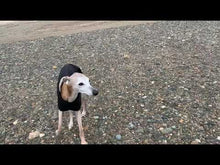 Load and play video in Gallery viewer, sighthound coat on beach in summer