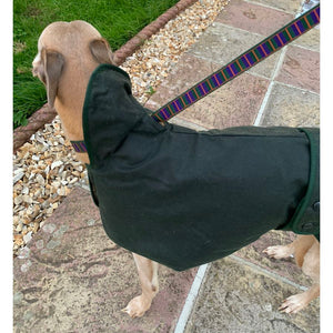 waxed whippet coat with hole for the lead when the winter weather protection hood is in the forwards position