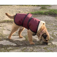 Load image into Gallery viewer, underbelly dog coat on harley. warm dry cozy uk made