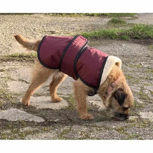 underbelly dog coat on harley. warm dry cozy uk made