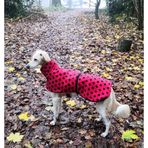 Saluki fleece coat with Polka dots