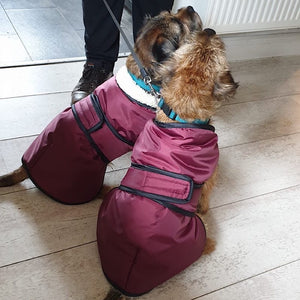 Underbelly Dog Coat