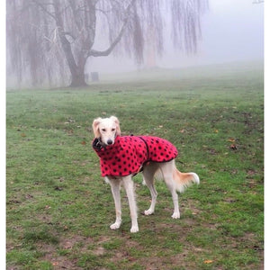 Tink the saluki loves her new ladybird kennel coat in polka dogs