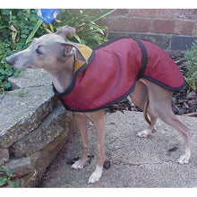 Load image into Gallery viewer, for The Trendy Italian greyhound in your lift. Perfect summer IGH coat