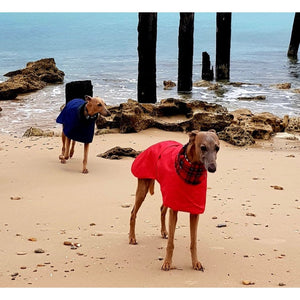 Red waterproof whippet coat with harness hole. Custom fit, design your own coat. Strange sizes catered for.