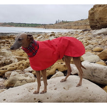 Load image into Gallery viewer, fleece lined waterproof whippet coat in red with high-collar and velcro