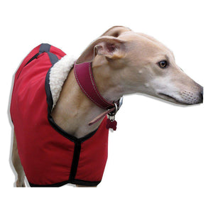 boris the whippet wearing red whippet coat uk