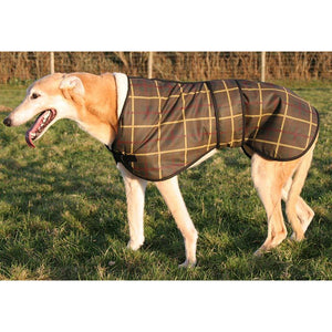 From the side - Mr Ted the Greyhound in his lovely tartan wax dog coat