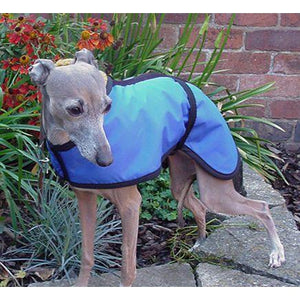 Italian greyhound summer dog coat. Shower proof and windproof