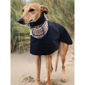 best whippet coats for winter weather. Black with cream tartan/check collar