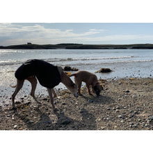 Load image into Gallery viewer, harley and joey on the beach in summer wearing doggy rain jackets