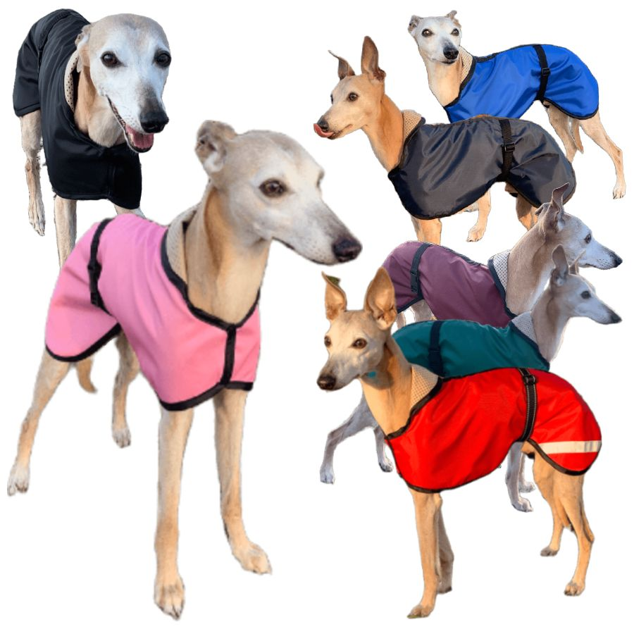 Summer whippet coats all colours. Trendy whippets on display. Sighthound dog coats