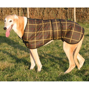 Ted the fawn greyhound wearing his lovely tatan wax lurcher coat