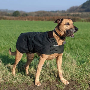 barbour hunter waxed dog coat in green