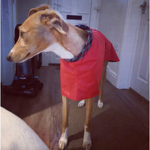 Load image into Gallery viewer, lightweight greyhound coat. high-collar with velcro slip over head and fasten belt