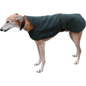 Wax Greyhound / Whippet Coat Green