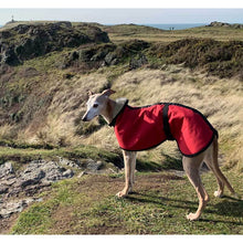 Load image into Gallery viewer, whippet coats uk. joey the whippet out on his walkies wearing his red coat
