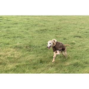 coats for whippets uk