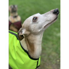 Load image into Gallery viewer, sighthound coats made in the uk. High visibility waterproof and warm or cool versions available - please select