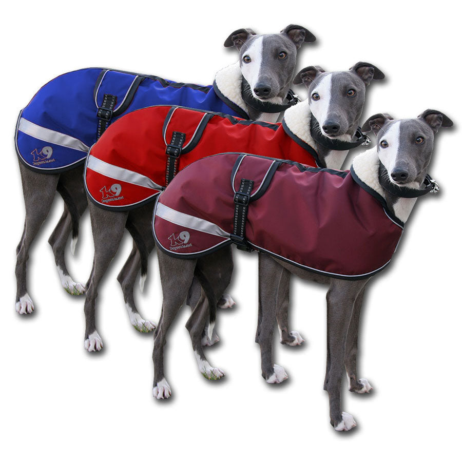 Kellings Dog Coats - starbright whippet coats uk made. The trendy whippet. sighthound coats
