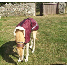 Load image into Gallery viewer, greyhound wearing a wine coloured waterproof fleece lined dog coat stylish