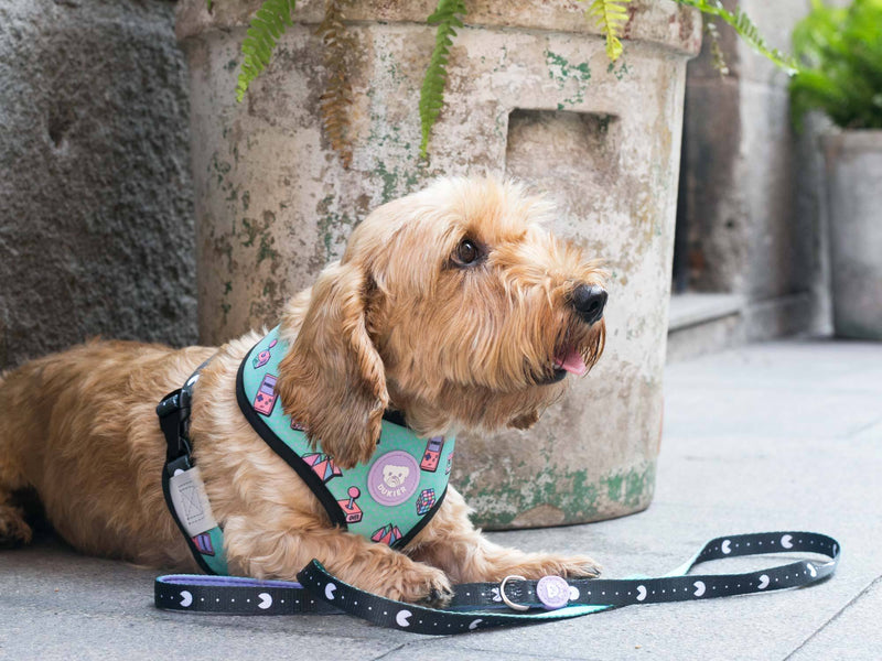 90´S REVERSIBLE DOG HARNESS - Dukier Store