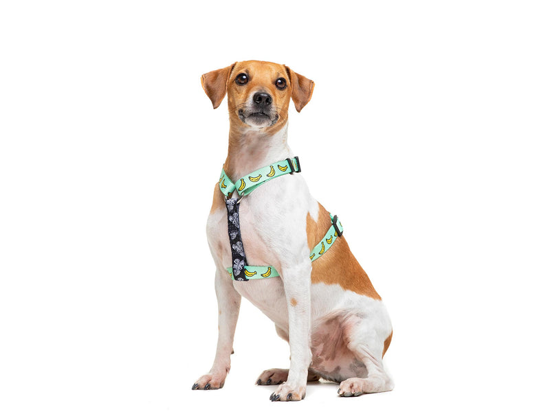 BANANA CLASSIC DOG HARNESS - Dukier International Store