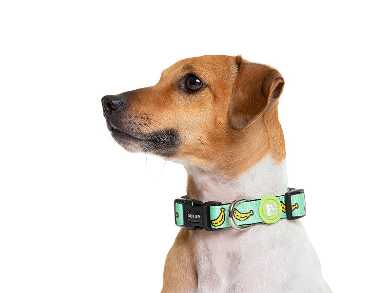 BANANA DOG COLLAR - Dukier International Store