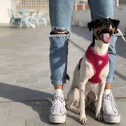 BASIC PINK HARNESS FOR DOGS - Dukier Store