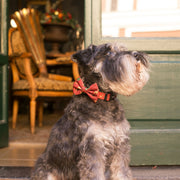 CHRISTMAS BOW TIE FOR DOGS - Dukier Store