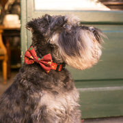 CHRISTMAS DOG COLLAR - Dukier Store