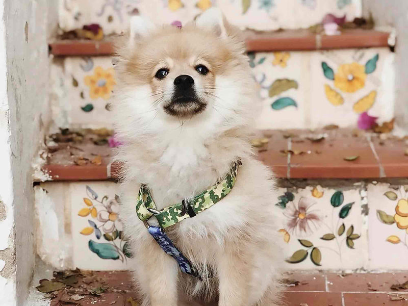 CLASSIC CAMO HARNESS FOR DOGS - Dukier Store