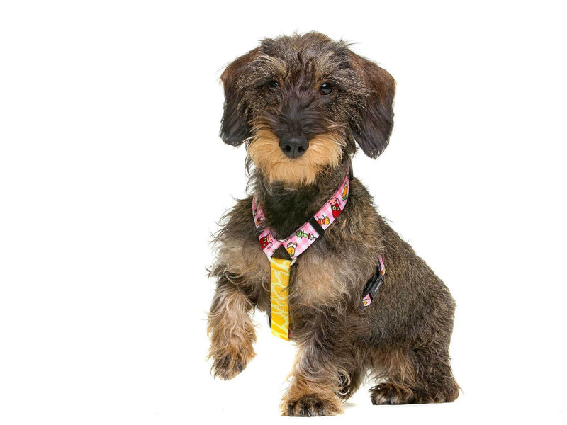 CLASSIC HARNESS TAPAS FOR DOGS - Dukier Store