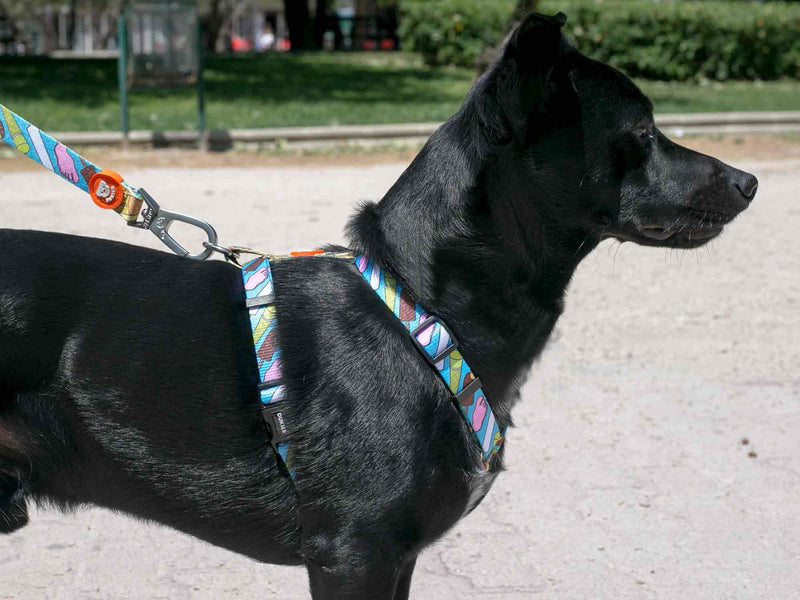 CLASSIC HELADOG HARNESS FOR DOGS - Dukier Store