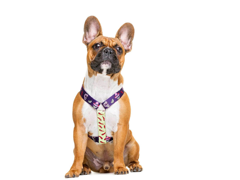 CLASSIC MEXICO HARNESS FOR DOGS - Dukier Store