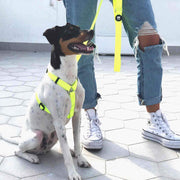 CLASSIC NEON HARNESS FOR DOGS - Dukier Store