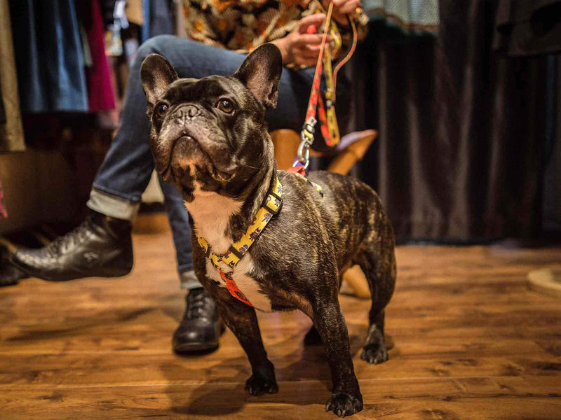 CLASSIC SUPERDOG DOG HARNESS - Dukier Store