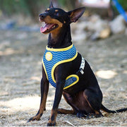 DUCKS REVERSIBLE DOG HARNESS - Dukier Store
