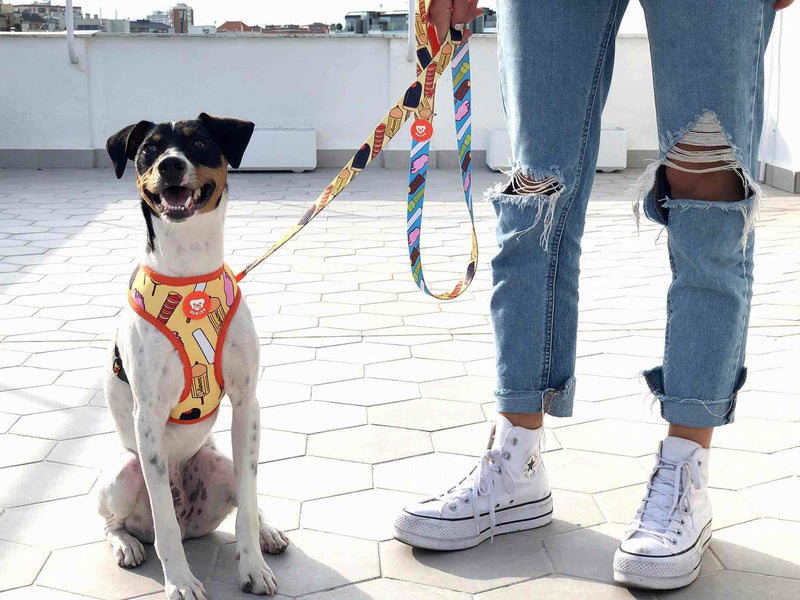 HELADOG LEASH FOR DOGS - Dukier Store