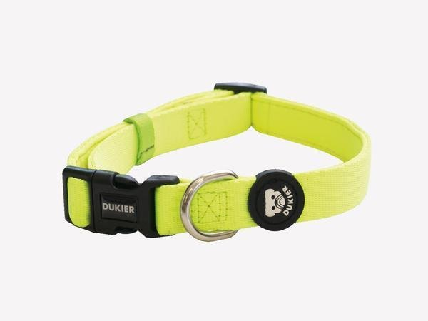 NEON DOG COLLAR - Dukier Store