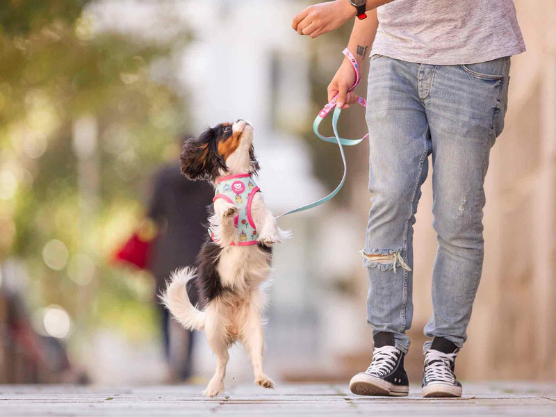 PRINCESS LEASH FOR DOGS - Dukier Store