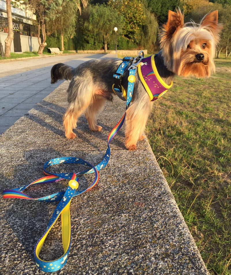 RAINBOW LEASH FOR DOGS - Dukier Store